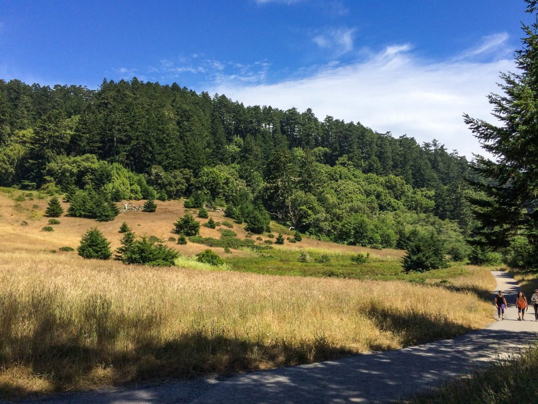 Pt Reyes trail
