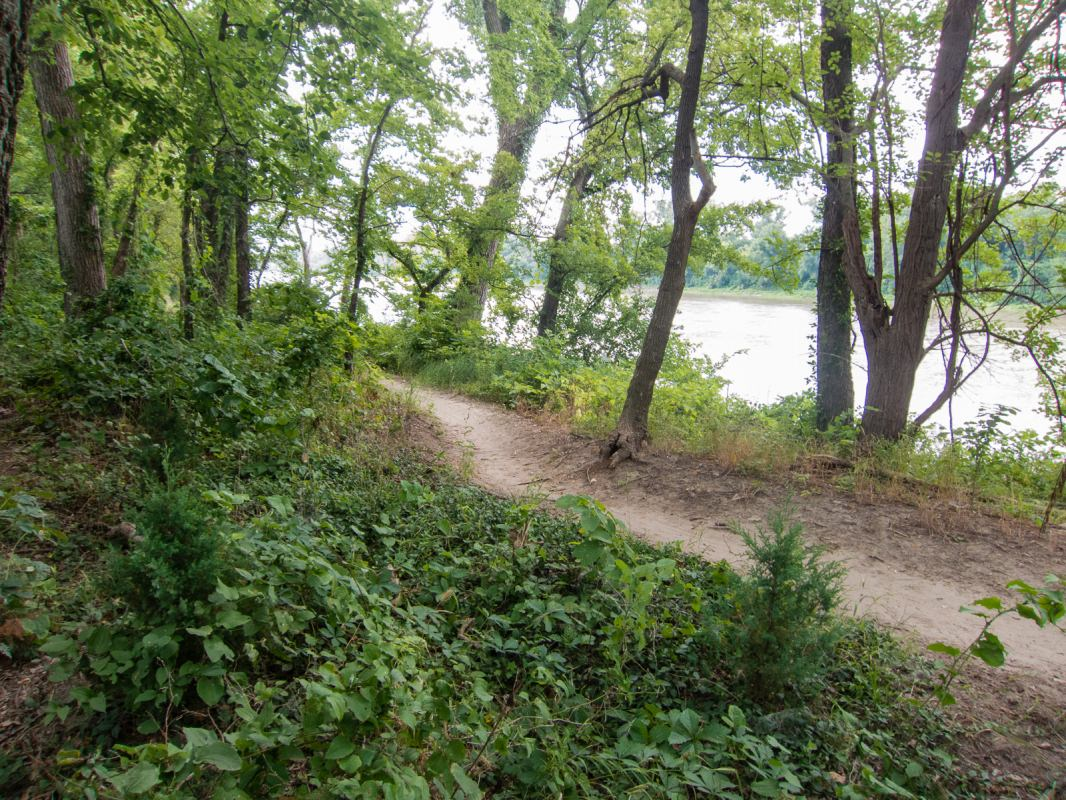 Lawrence River Trails