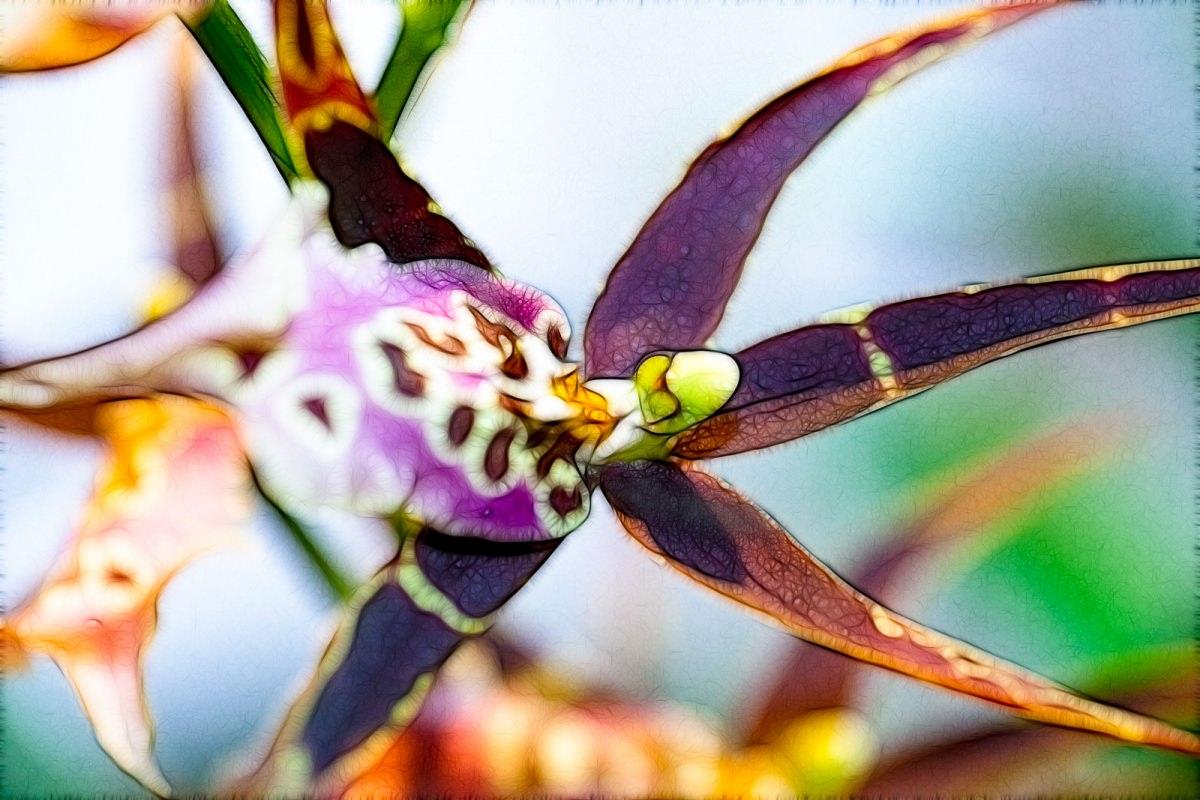 Fractalius Orchid