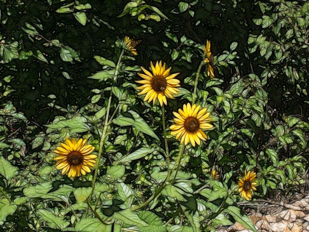 Meadowlark Trail: Fractalius Sunflowers