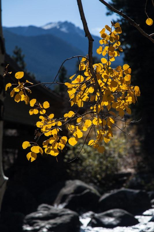 2014 Favorites: Fall in the Rockies
