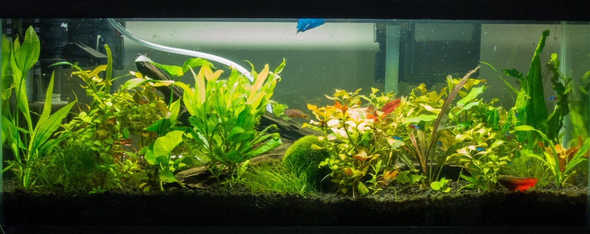 20 gallon planted tank