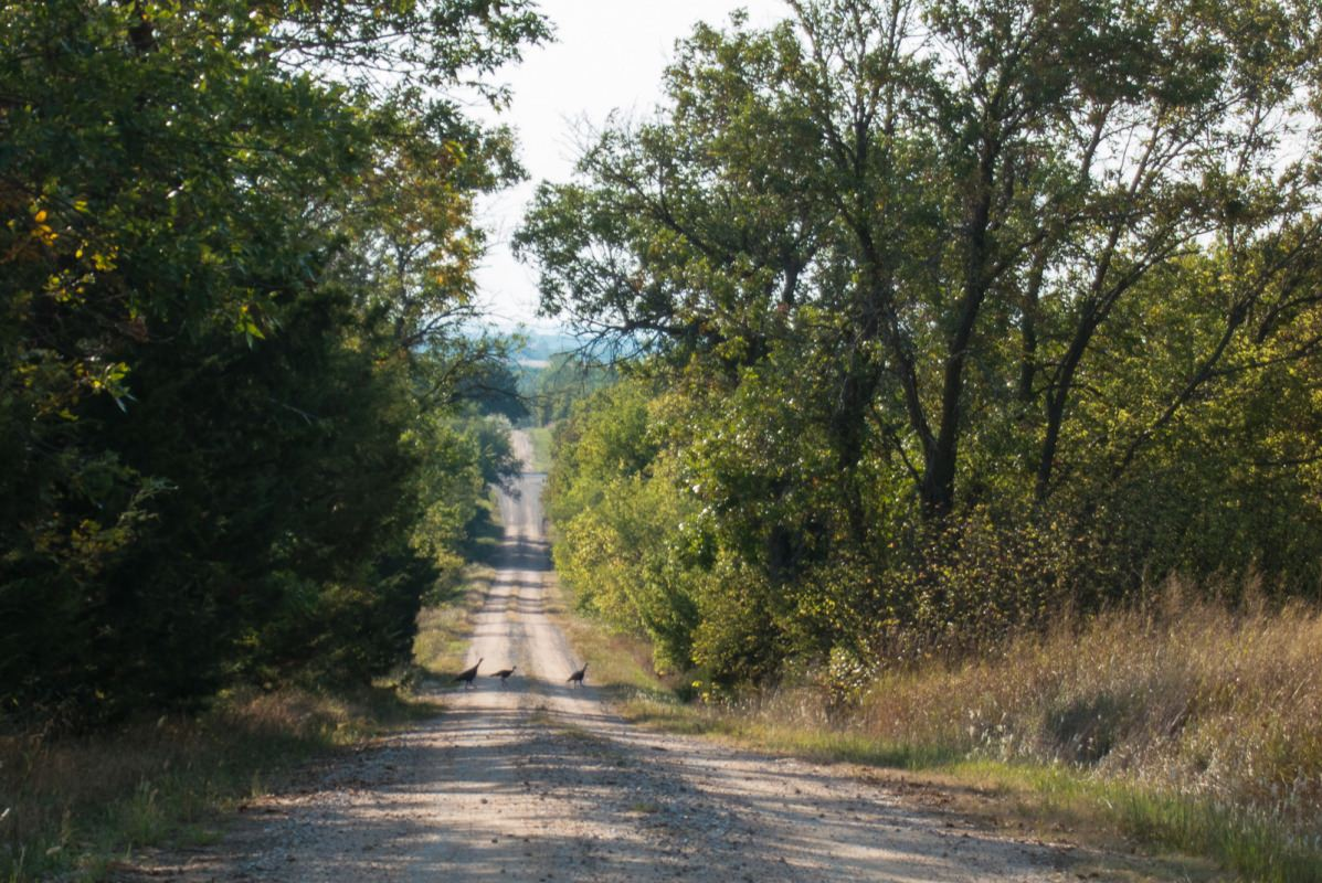 September Country Ramble