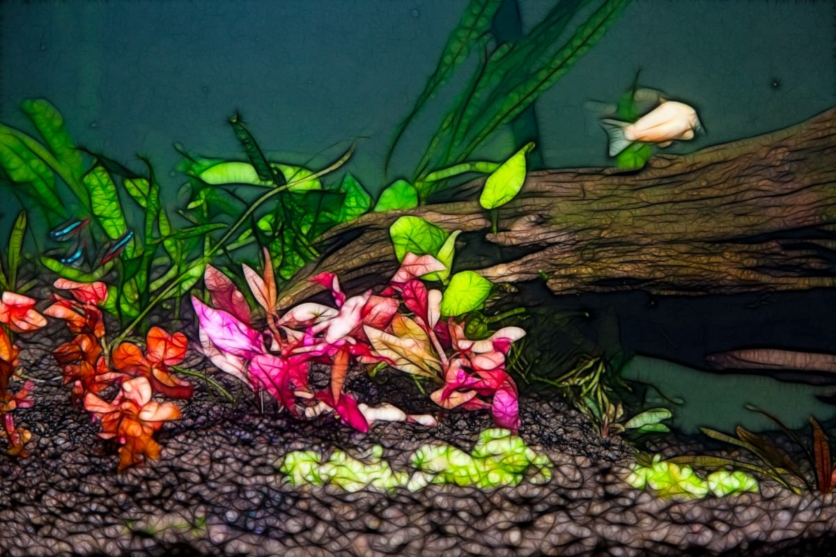 32 gallon planted tank