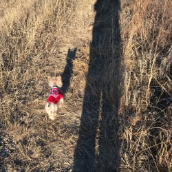 Sparkle's Last Great Walk