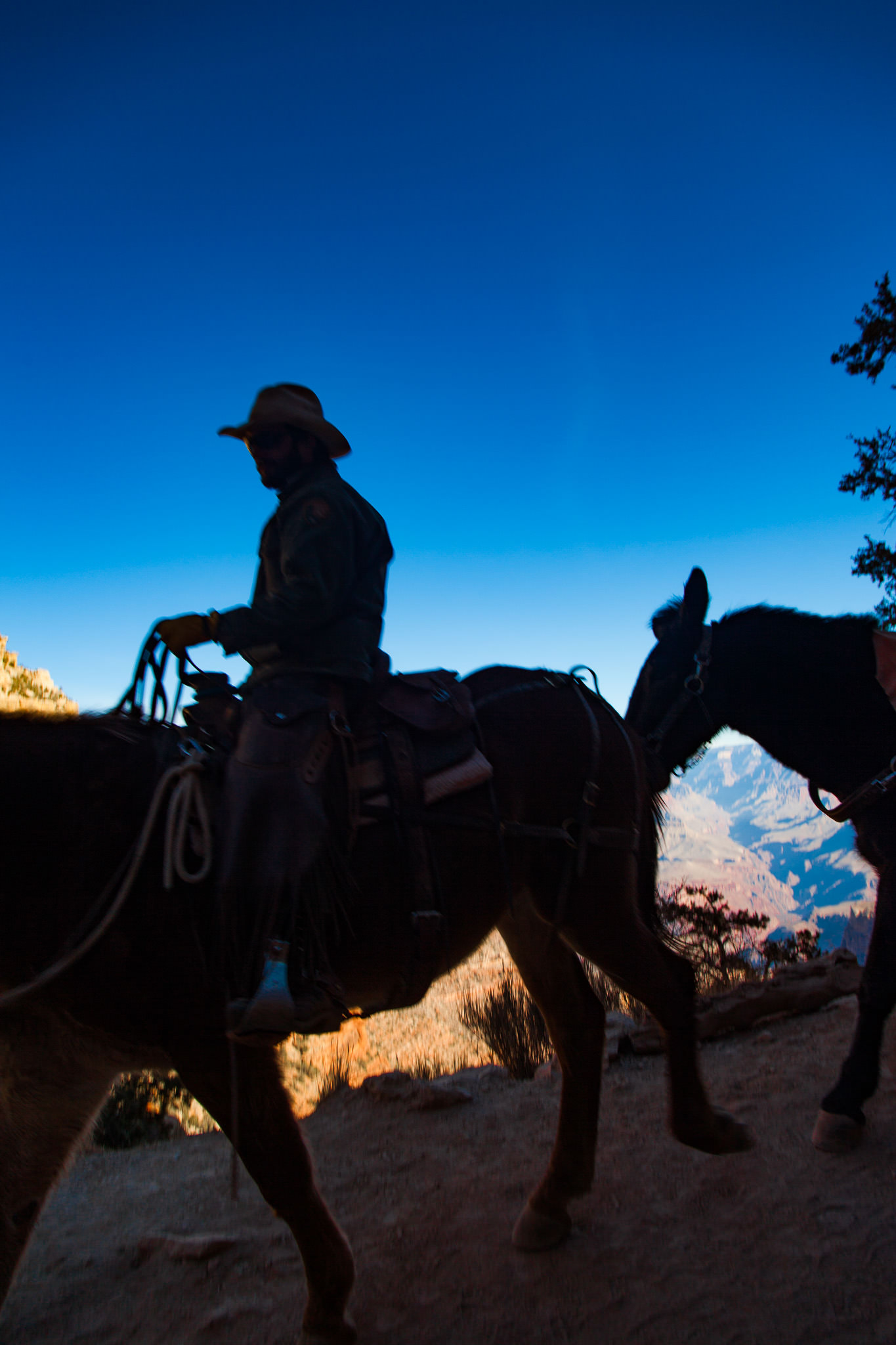 Grand Canyon Hike: Mules on the Trail