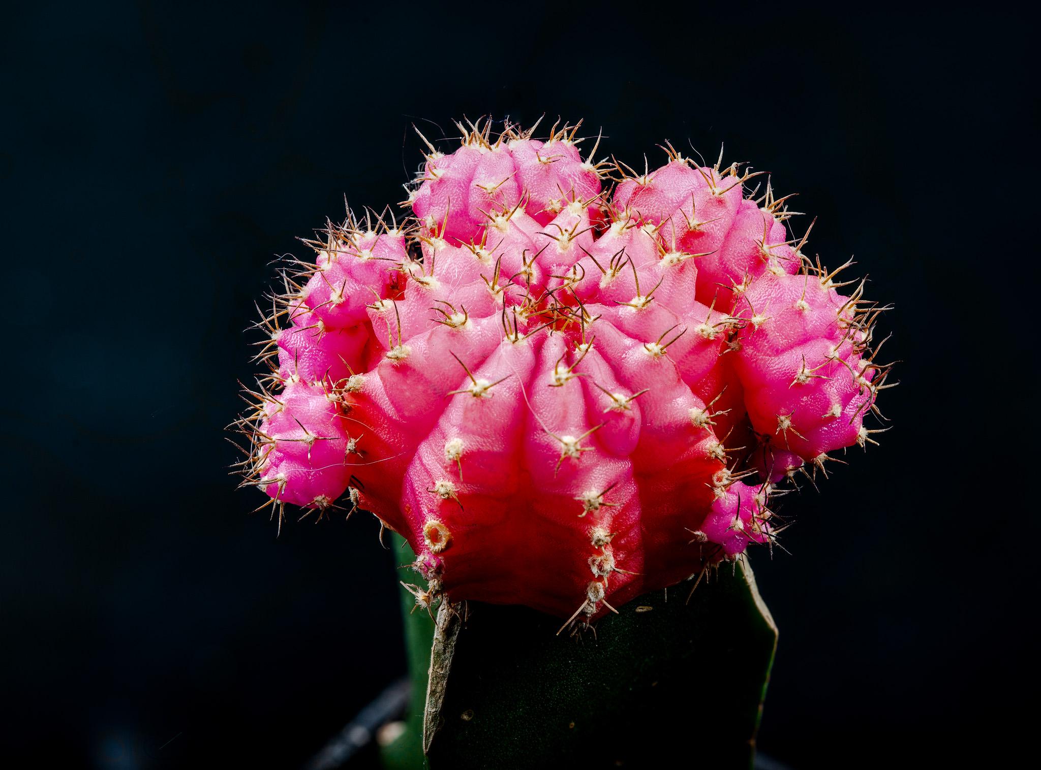 41 shot stacked cactus