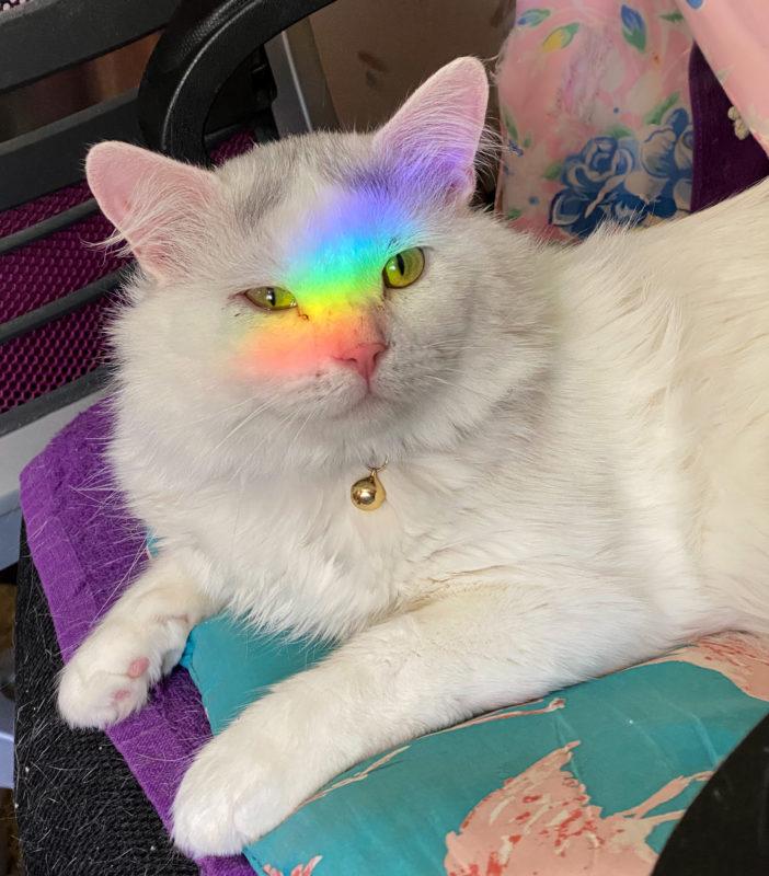 Aiko the Rainbow Kitty