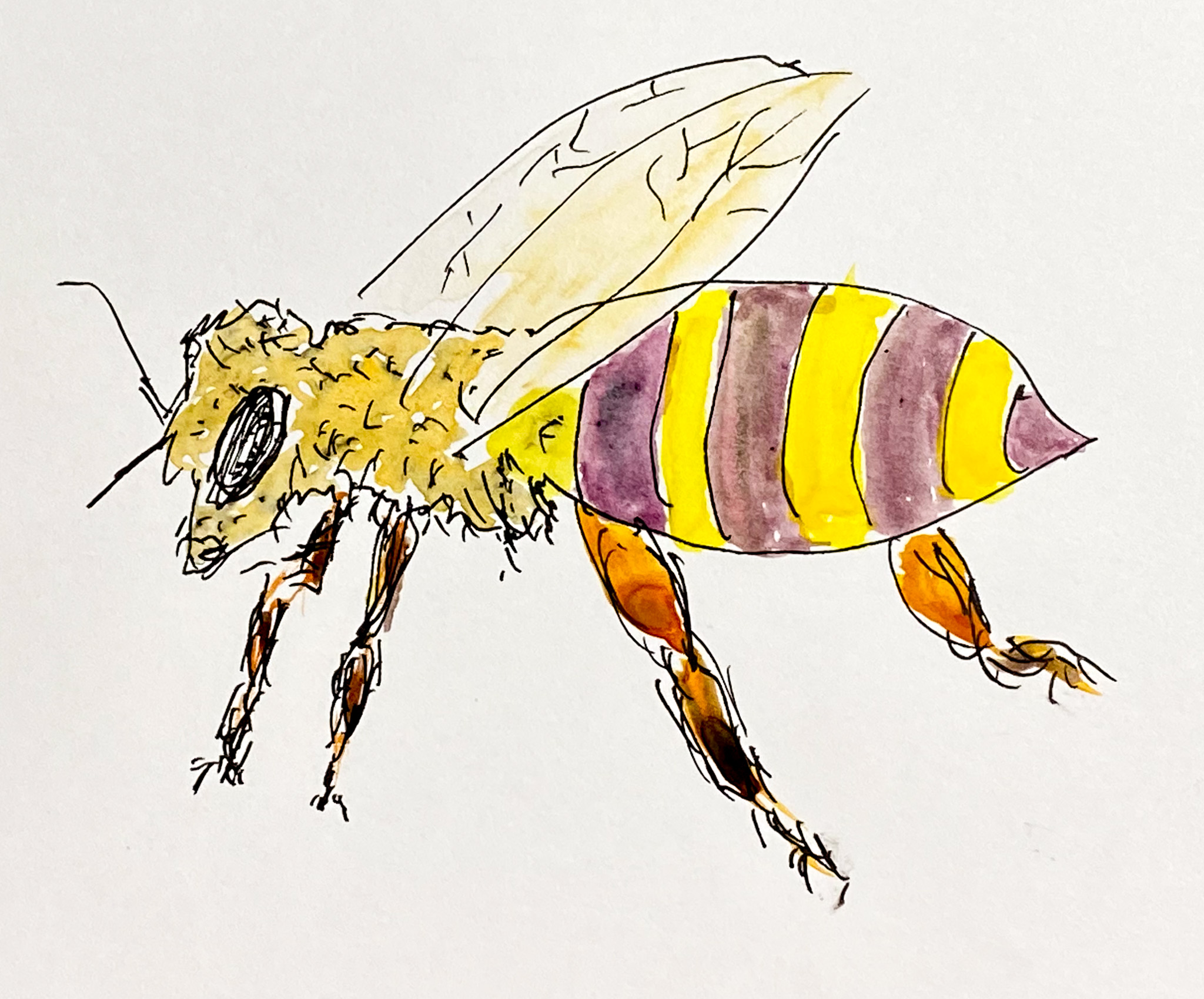 Inktober Day 15 - Honeybee