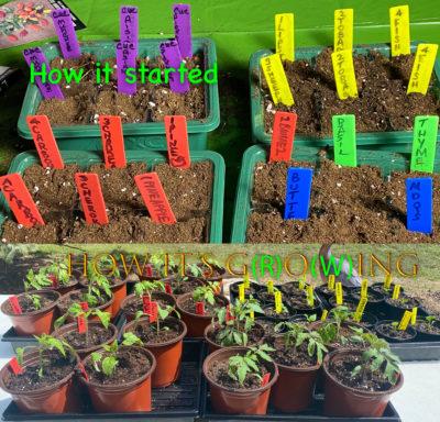 Seeds to Seedlings!