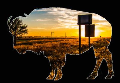 Bison Views