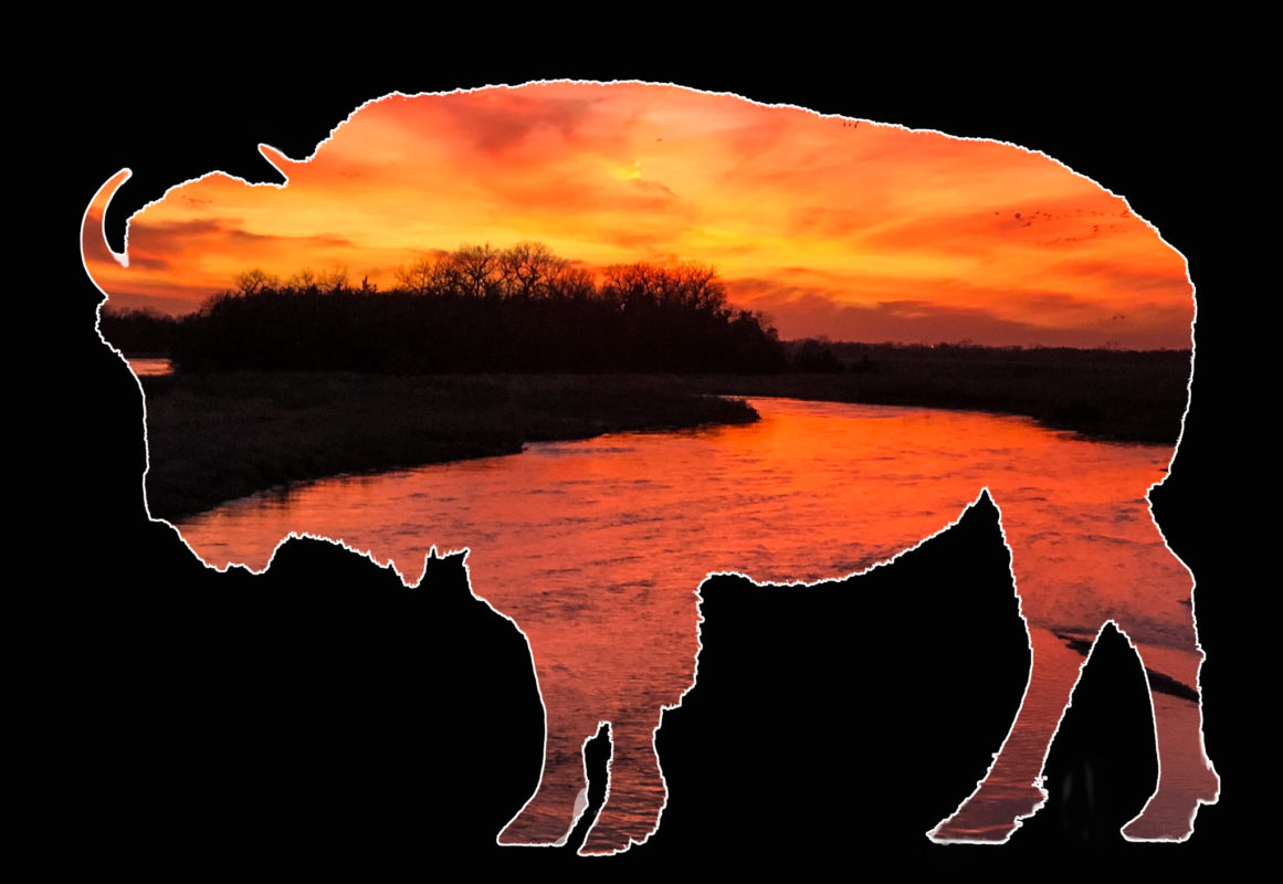 Bison View -- Nebraska Sunset