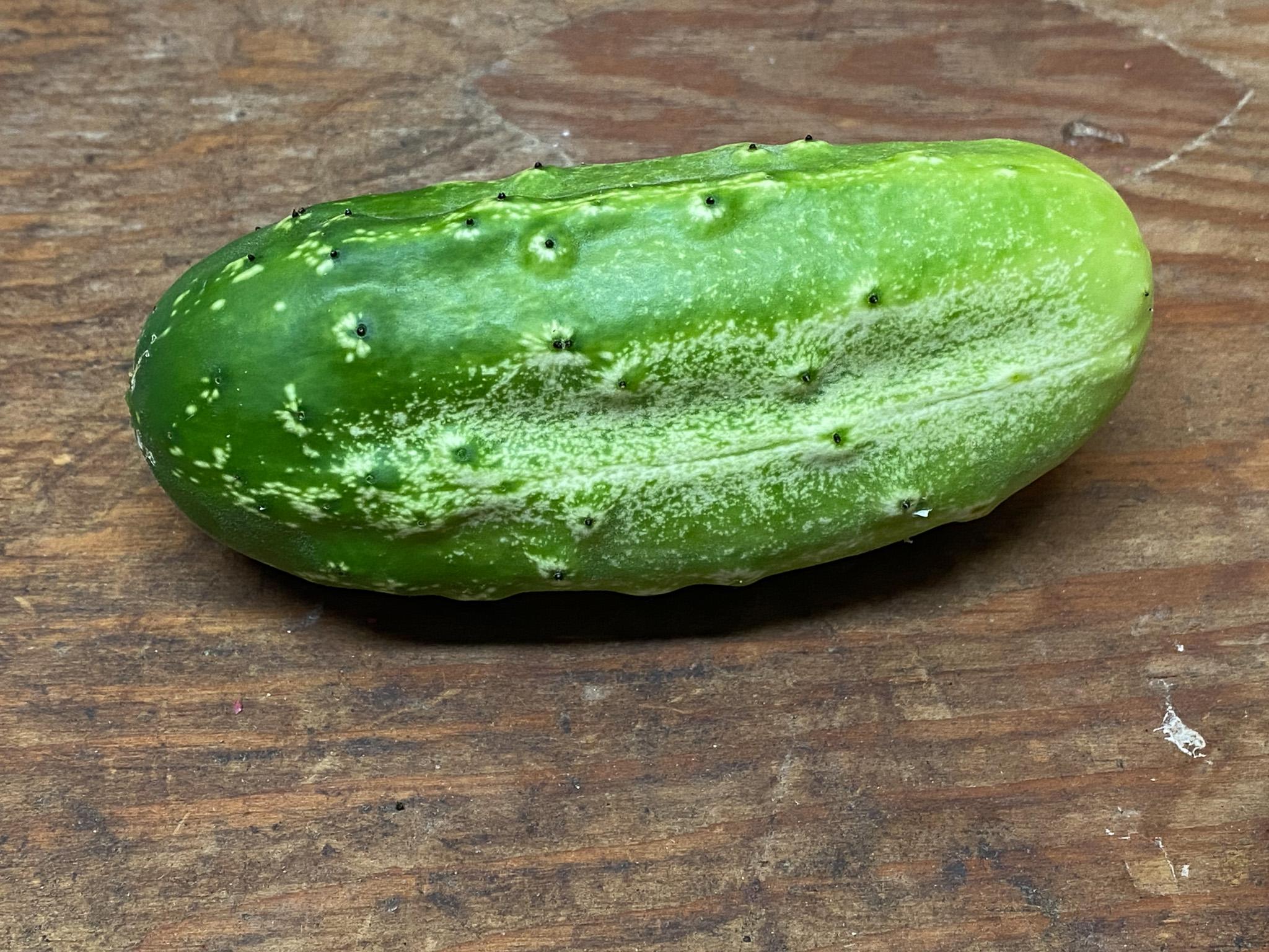 Our Garden: First Cucumber